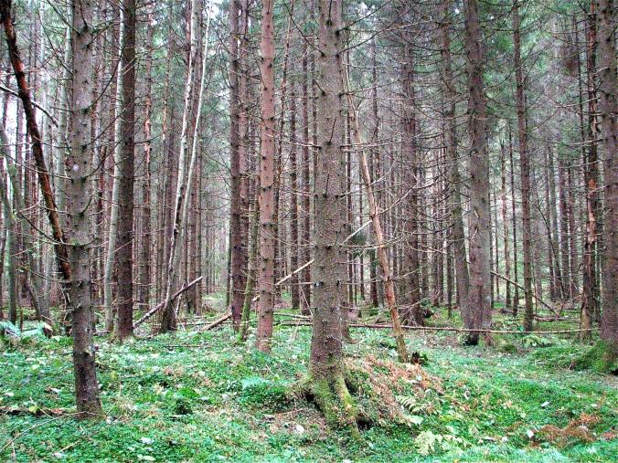 Skogen på Veholt